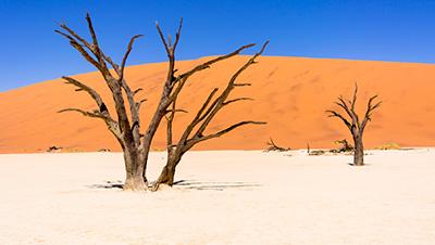 乾燥_砂漠
