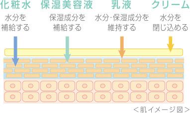 肌イメージ図