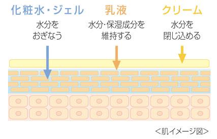 保湿剤の種類と役割を示した肌イメージ図。