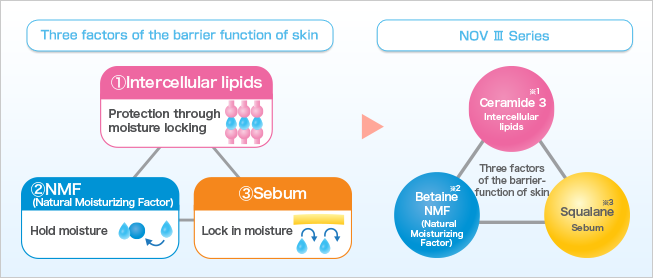 Three factors of the barrier function of skin | ①Intercellular lipids | Protection through moisture locking | ②NMF (Natural Moisturizing Factor) | Hold moisture | ③Sebum | Lock in moisture | NOV Ⅲ Series | Three factors of the barrier function of skin | Ceramide 3 ※1 | Intercellular lipids | Betaine※2 | NMF (Natural Moisturizing Factor) | Squalane※3 | Sebum