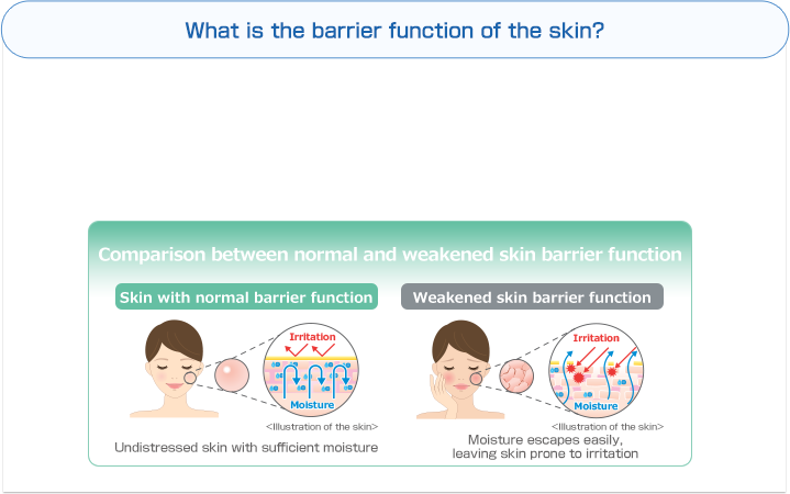 What is the barrier function of the skin? | Comparison between normal and weakened skin barrier function | Skin with normal barrier function | Irritation | Moisture | <Illustration of the skin> | Undistressed skin with sufficient moisture | Weakened skin barrier function | Irritation | Moisture | Moisture escapes easily, leaving skin prone to irritation
